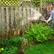 How to: Prepare your garden for winter